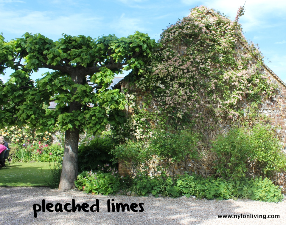 pleached_limes