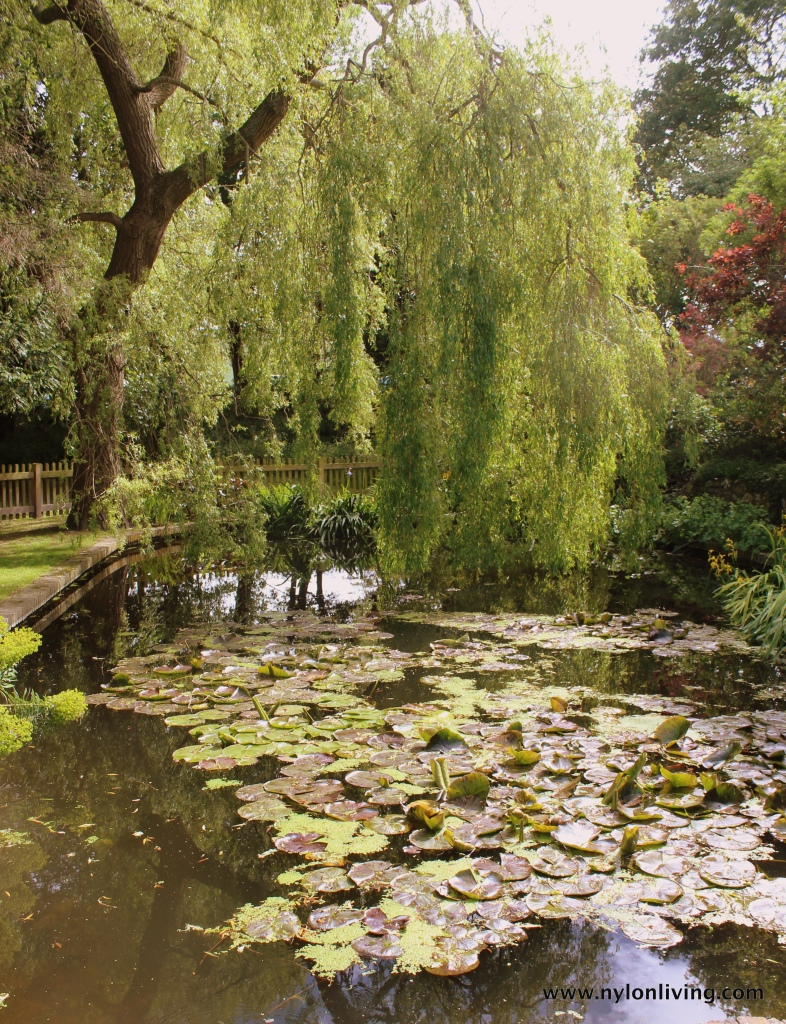 pond_willow