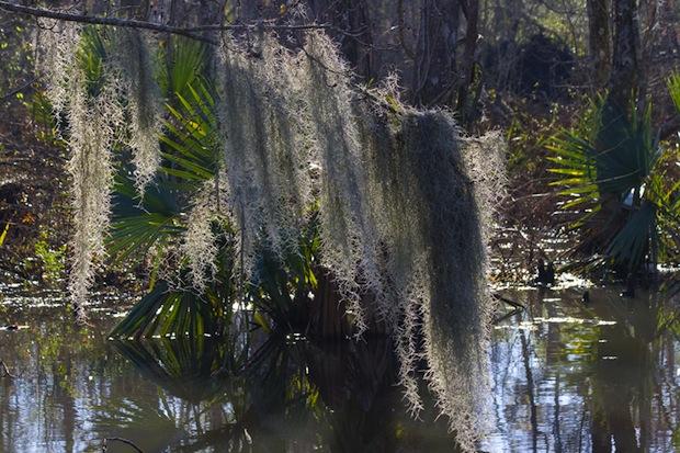 manchac swamp