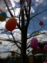 eggs hanging from tree